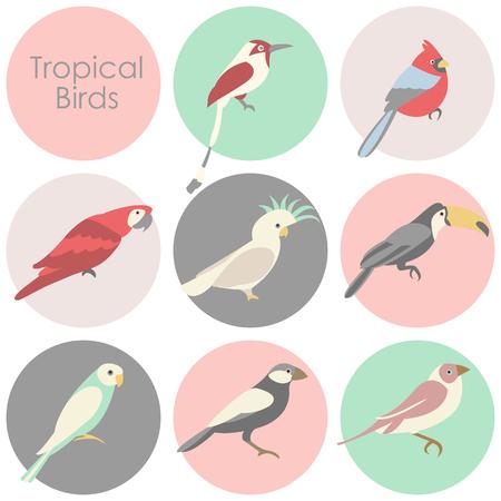 Vector illustration of tropical birds icon.