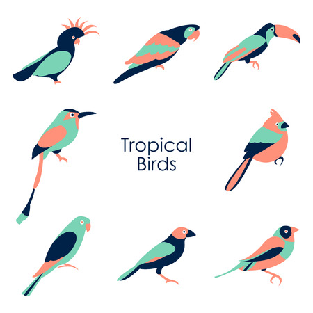 Vector illustration of color tropical birds icon Illustration