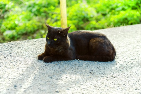 warming up: Black young cat warming up at the road in the afternoon. Stock Photo