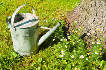 An old metallic watering-can standing on the lawn.
