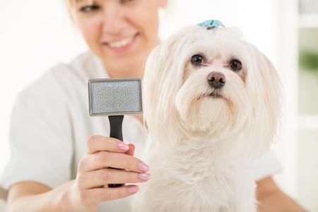 Close-up portrait maltese dog and animal brush Standard-Bild