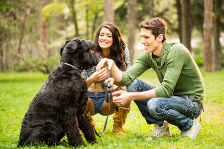 crouches: Young attractive girl crouches in the park with her boyfriend next to the dog, a black giant schnauzer.