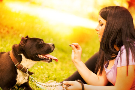 dog owner: Cute stafford terrier getting a treat by his girl owner in the park.