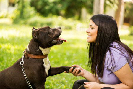 stafford: Cute stafford terrier giving paw to a young girl in the park. Stock Photo