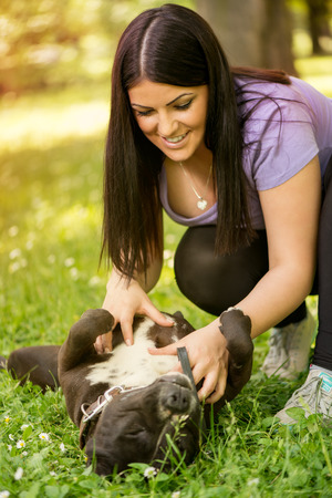 stafford: Beautiful young woman playing with her cute stafford terrier in the park. Stock Photo