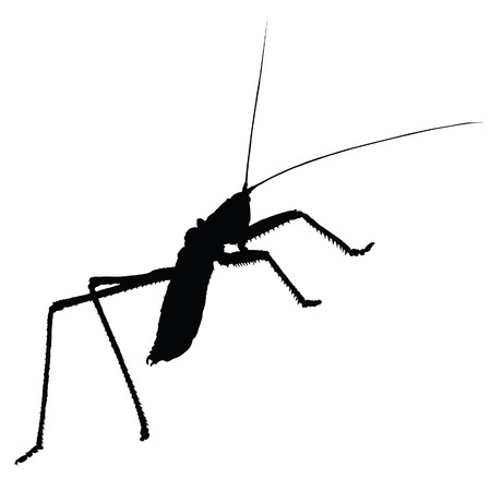 strange insect vector silhouette on white background Vector