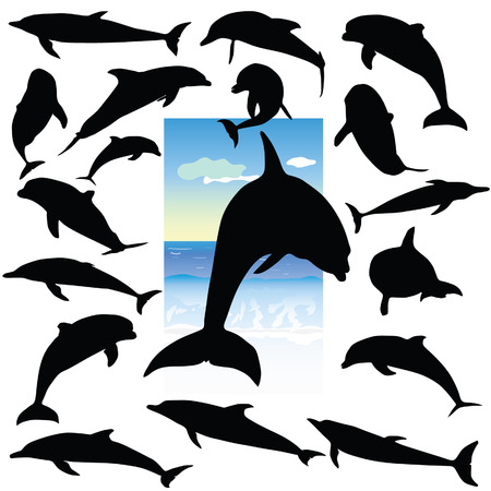 dolphin black silhouetttes in color on white background Vector