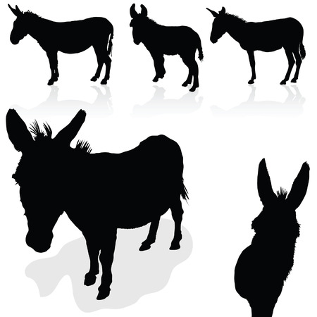 jackass: donkey black vector silhouette on white background
