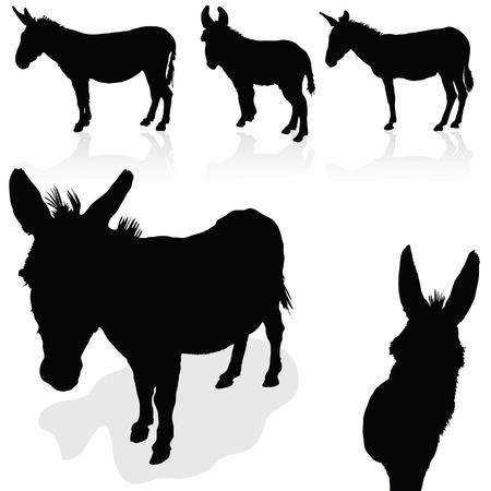 grosse fesse: âne vecteur silhouette noire sur fond blanc