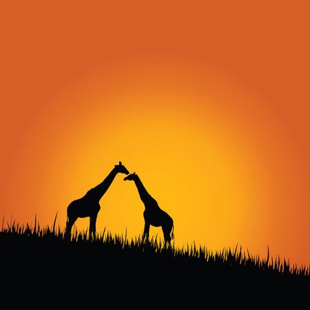 camelopardalis: giraffe in wilderness color vector illustration