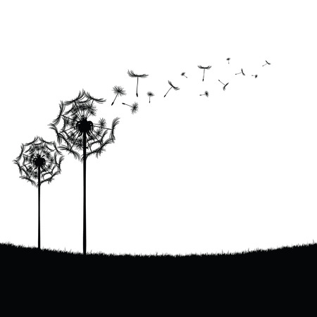 accumulate: dandelion black illustration in nature