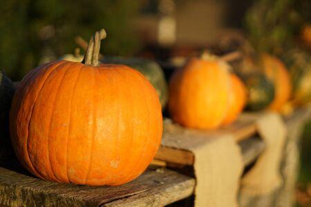Orange autumn pumpkins on wooden table, thanksgiving postcard