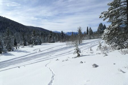 Snowmobiling track in wilderness, Idaho, United States