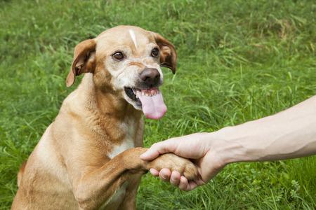 비우호적 인 손과 발 떨림. 풀밭에 갈색 개입니다.