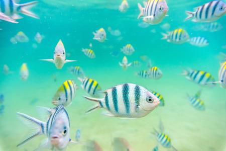 fond marin: Poisson de mer � des fonds marins peu profonds
