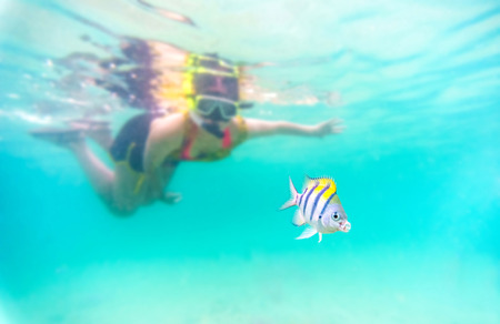 skin diving: selective focus to the fish : Skin diving or snokerling at shallow of beach distrub the sea life