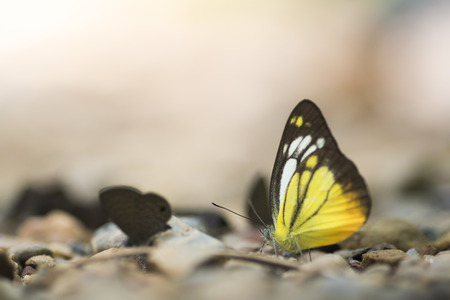 Close up of  butterfly on the ground in nature Stockfoto