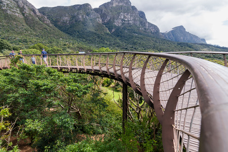 Canopy suspension bridge at botanical garden in kirstenbosch cape town south africa