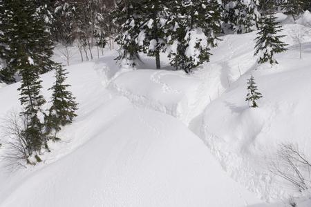 frosty winter landscape in snowy pine forest Stockfoto