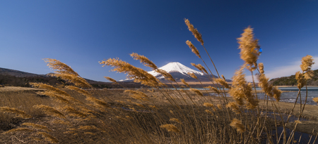 Beautiful Fuji mountain at cold lakeside with dry brown Grass and blue sky Stockfoto