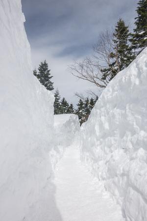 Frosty walk way thourgh in snowy pine forest Stockfoto