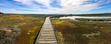 Panorama Long wood bridge over sea plant , the way to bird hide at west coast national park , cape town south africa