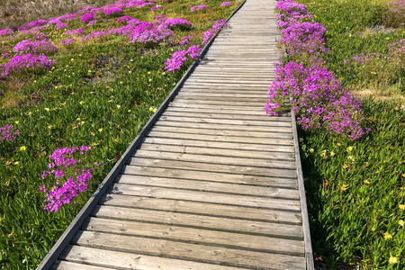 Long wood bridge over flower field , the way to bird hide at west coast national park , cape town south africa Stockfoto