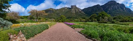 Panorama shot Walk way through the garden at botanical garden in kirstenbosch cape town south africa