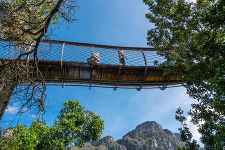 Canopy suspension bridge at botanical garden in kirstenbosch cape town south africa