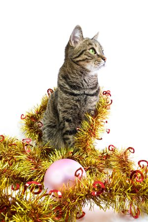 look at right: The cat in a golden tinsel look right Stock Photo