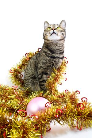 trumpery: Interested cat in a tinsel look up
