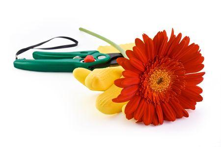 Red fresh gerbera, yellow gloves and green garden scissors Stock Photo - 4959696
