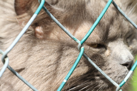 ojos tristes: Gato con los ojos tristes en una jaula. Refugio de animales