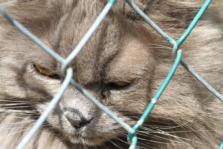 occhi tristi: Gatto con gli occhi tristi in una gabbia. Rifugio per animali