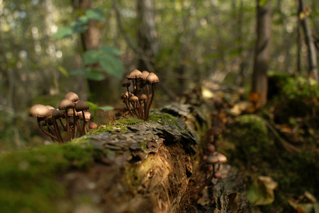 Brown Toadstool Mushroom in the Forest in Autumn photo