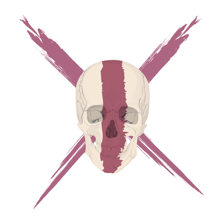 sapiens: human skull bones skeleton dead anatomy illustration Illustration