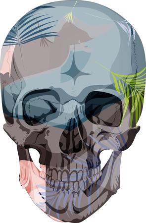 human skull bones skeleton dead anatomy illustration  イラスト・ベクター素材