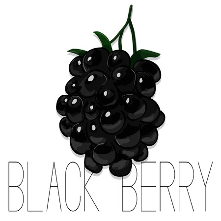 dewberry: Vector hand drawn watercolor painting blackberry on white background. Fashion illustration of forest berries. Sketch of summer fruit. Food organic logo. Sweet tasty dessert