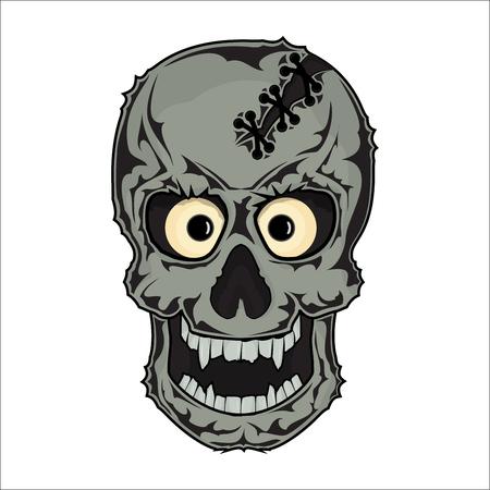 The bones of the skull human skeleton