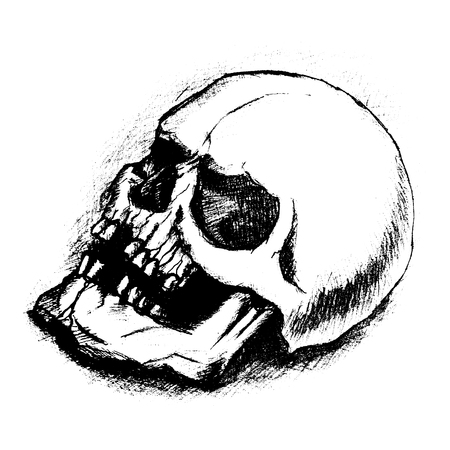 human skull bones skeleton dead anatomy illustration Illustration