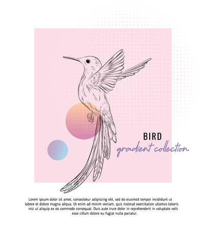 Small colibri vector illustration with typography.  Digital art with trendy geometric shapes and gradient mesh. Small brid duoone contemporary template