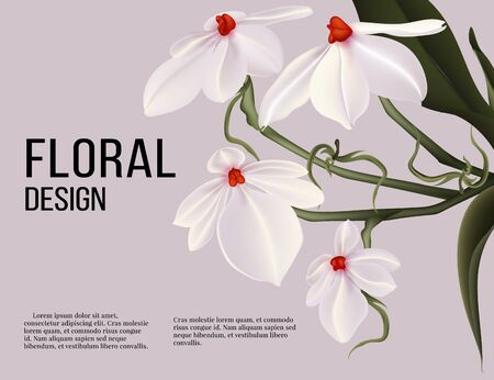 Rhodosticta realistic vector flower card with text poster, wedding design, holiday greeting postcard composition. Aerangis luteo alba design in vector.