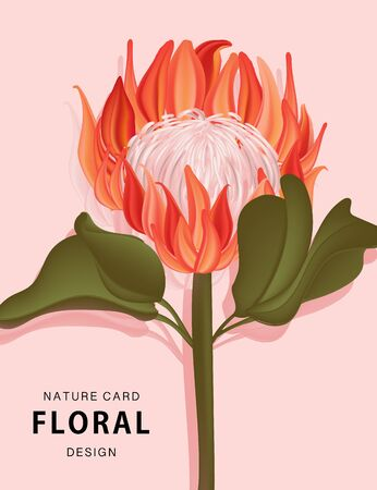 Protea flower nature exotic plant. Reallistic 3d tropical vector art. Wildflower, tropical herb, greenery leaf collection garden and wild, forest herb, flowers, branches. Vector.
