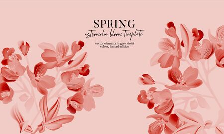 Monochrome pink astromelia flower bloom realistic vector card. Macro astromelia plant, nature design with leafand  flower, floral spring decoration. Иллюстрация