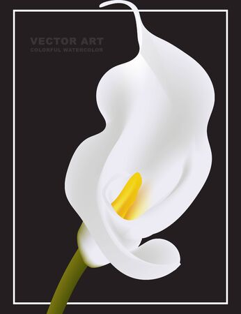 White Calla vector flower card template isolated on black background. Myay be used as a funeral memory illustration, mourn art or holiday design. Illustration