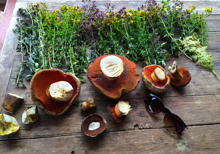 The forest harvest at the autumn. Herbs and mushrooms on the wood table background. Still life