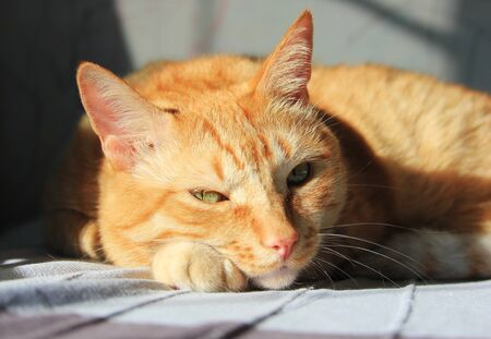The ginger cat lying down on the sun in the house