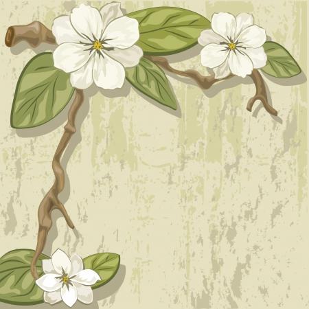 slab: blooming magnolia branch on a stone slab
