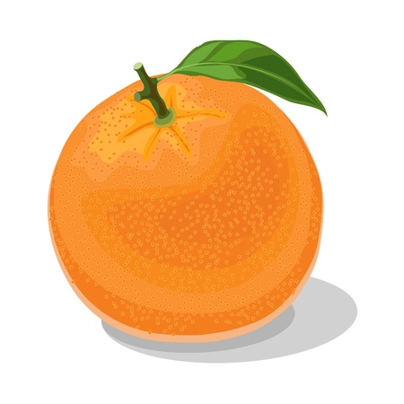 big ripe orange on white background Vector