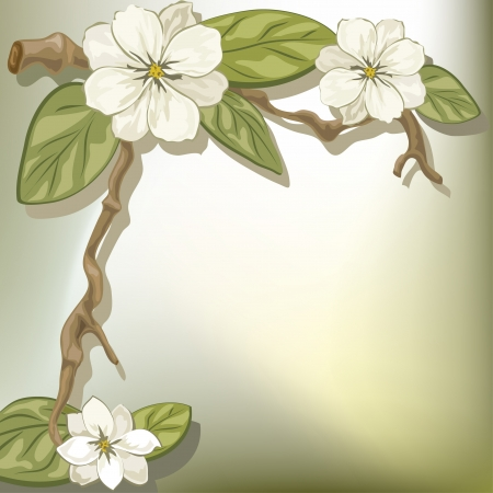 Vector illustration of a branch of a blooming magnolia  Vector